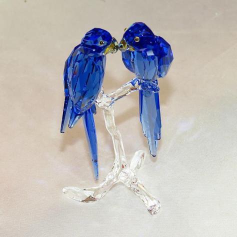 """2014 SCS Hyacinth Macaws"""